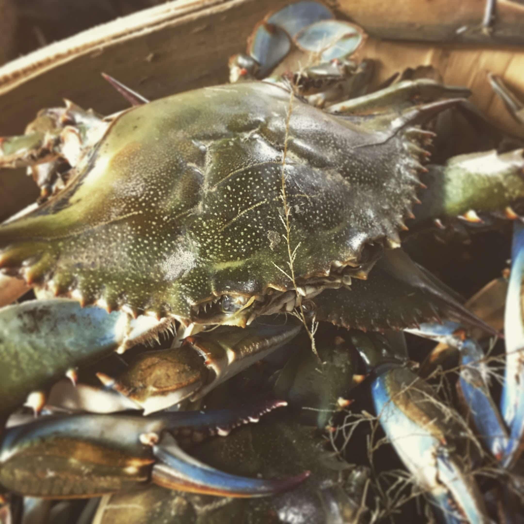 Conrad's Crabs & Seafood Market - Conrad's Crabs