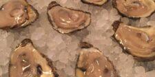 oyster half